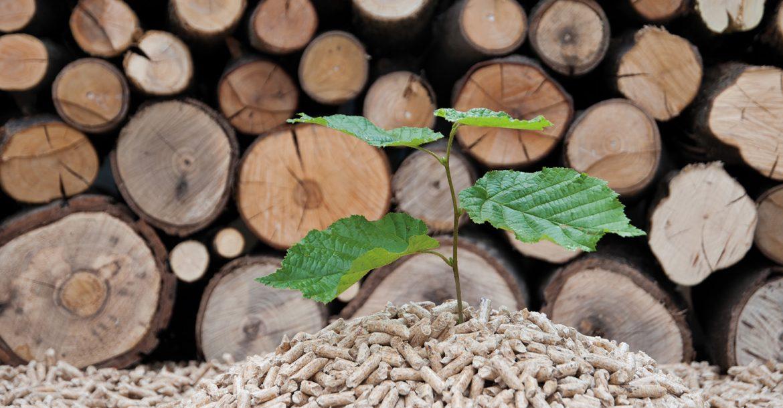 Olymp Heizen mit Holz